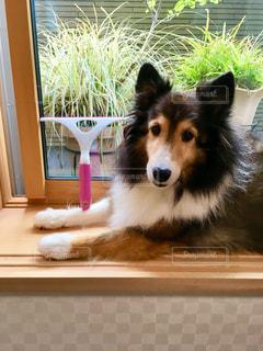 犬の写真・画像素材[1500346]