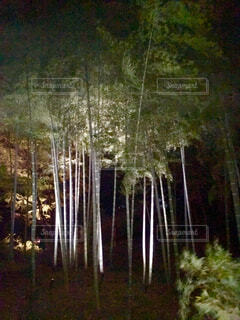 竹林の写真・画像素材[4416614]