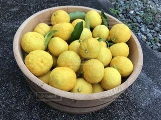 食べ物,果物,柑橘類,柚子 鈴なり 豊作 黄色