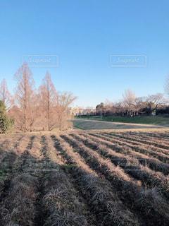 冬の晴れた日の写真・画像素材[3323337]
