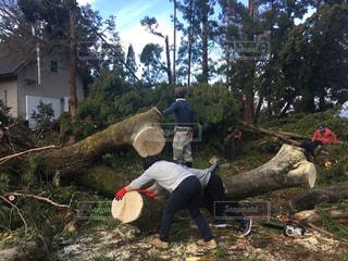 自然,樹木,台風,災害,片付け,竜巻,自然災害