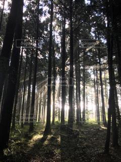 自然,空,森林,屋外,緑,樹木,草木