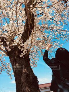 空,桜,ピンク,キラキラ,未来,ブルー,高校生,入学,目標,可能性