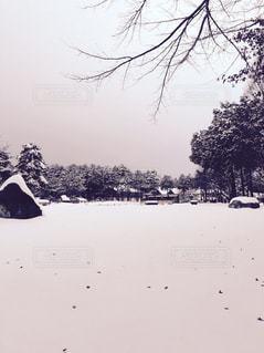 冬,雪,白,景色,ホワイト