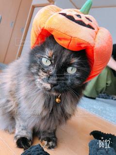 かぼちゃ帽子をかぶった猫の写真・画像素材[2500294]