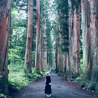 戸隠神社の参道の写真・画像素材[2513892]