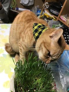 猫,食べ物,家,ごはん,草木,猫草
