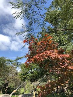 自然,風景,空,紅葉,秋空,今空,空の世界