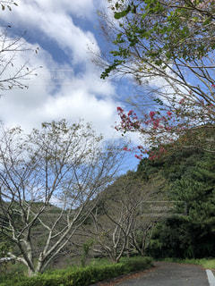 風景,空,森林,木,青,散歩,大地,癒し,一息,秋空,なごみ,今空,空の世界