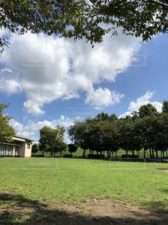 自然,風景,空,秋,太陽,雲,晴れ,散歩,美しい,樹木,秋晴れ,のんびり,秋空,気持ちいい,スカイ,美,今空,空の世界
