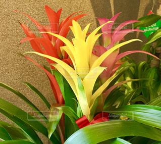 花瓶は、緑の植物の上に座っている花でいっぱいの写真・画像素材[1548221]