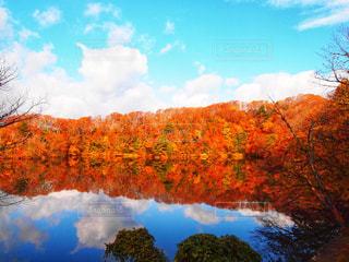 自然,秋,紅葉,青空,池,景色,樹木,感動,秋空,インスタ,インスタ映え