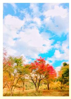 自然,秋,景色,樹木,秋空,インスタ,インスタ映え