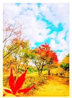 自然,秋,紅葉,もみじ,景色,鮮やか,樹木,感動,秋空,インスタ,インスタ映え