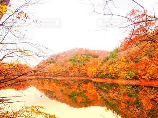 自然,秋,紅葉,もみじ,鮮やか,秋空,インスタ映え
