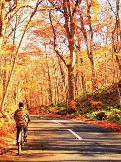 自然,秋,紅葉,自転車,後ろ姿,もみじ,鮮やか,サイクリング,秋空,インスタ映え