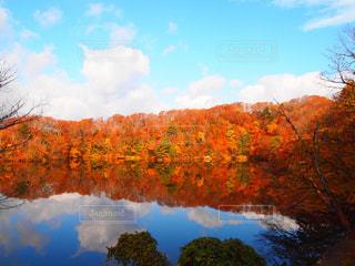 近くに池のアップの写真・画像素材[1597782]