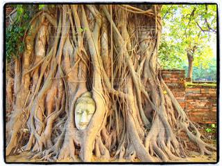 自然,樹木,旅行,遺跡,タイ,バンコク,アユタヤ,インスタ映え