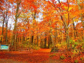 森の前に木の写真・画像素材[1598418]