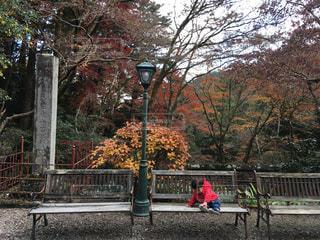 秋,紅葉,ベンチ,山,子供,椅子,秋空,小さい秋