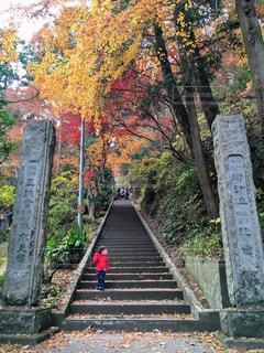 秋,紅葉,神社,階段,子供,観光,落ち葉,秩父,小さい秋
