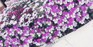 花,かわいい,きれい,鮮やか,新鮮