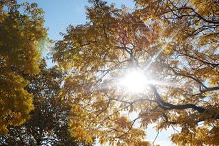 風景,空,秋,紅葉,屋外,カナダ,陽射し,秋空,陽ざし