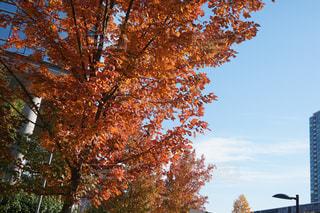 風景,秋,紅葉,屋外,海外,樹木,カナダ,秋空,眺め,空の日