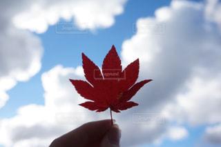 風景,空,秋,紅葉,赤,雲,陽射し,秋空