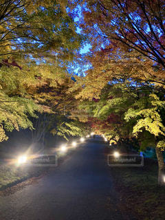 自然,秋,紅葉,屋外,葉,もみじ,長野県,草木,10月,カエデ,モミジ,箕輪町,もみじ湖