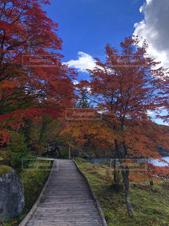 白樺湖の写真・画像素材[1597633]