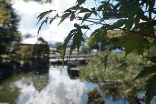 自然,秋,紅葉,屋外,葉,もみじ,池,樹木,長野県,松本市,草木,10月,カエデ,モミジ,あがたの森公園