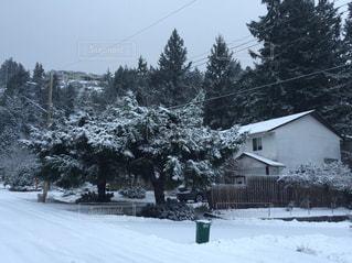 冬,木,雪,屋外,白,家,ホワイト,真っ白