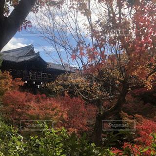 東福寺の写真・画像素材[1665636]