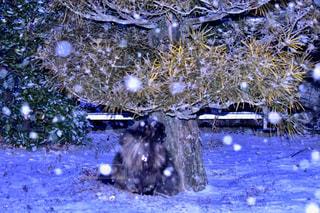 雪景色の写真・画像素材[1764056]