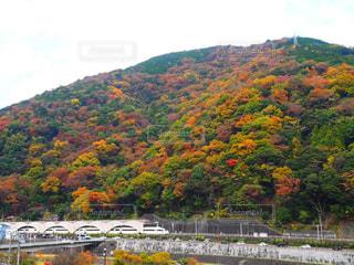 自然,秋,紅葉,11月,神奈川県,ロマンスカー,箱根湯本