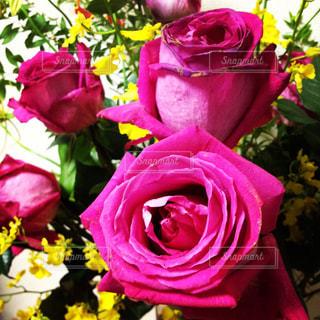 ピンク,花束,バラ