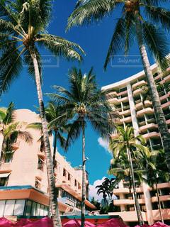 ピンク,旅行,ホテル,ハワイ,オアフ島,海外旅行,ピンク色,桃色,pink,フォトジェニック,ロイヤルハワイアンホテル