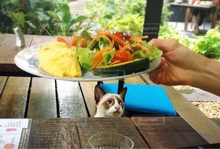 猫,朝食,トマト,ねこ,サラダ,かぼちゃ,レタス,ホテル,朝ごはん,ブレックファースト,美味しい,オムレツ,見つめる,食欲