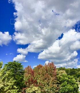 空,秋,紅葉,青空,大空,もみじ,秋晴れ,コントラスト,草木,秋の空,日中