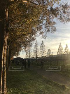 秋,並木道,秋空,秋の風景,メタセコイア並木,フォトジェニック