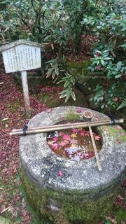 秋,紅葉,京都,もみじ,お寺