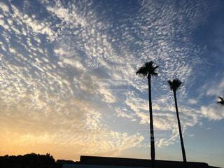 秋,屋外,うろこ雲
