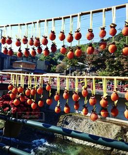 風景,秋,田舎,旅行,柿,秋空,干し柿
