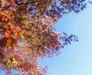 空,秋,紅葉,青空,秋空