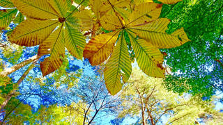 空,秋,青空,黄色,葉,秋空