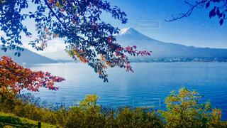 富士山,紅葉,湖,青空,秋空