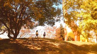 風景,空,公園,秋,紅葉,景色,イチョウ,銀杏,秋の空,秋色,子供達
