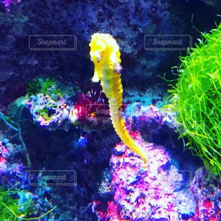 サンゴの水中ビューの写真・画像素材[1537723]