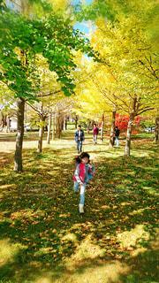 黄色、赤、緑カラフル🍁🍁🍁イチョウの並木道の写真・画像素材[1579235]